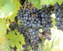 Manzu Wine·Solaris沙龍