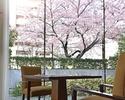 【桜が見える席確約】乾杯ロゼスパークリング付き!             前菜や魚料理、メインなど全5品!春を楽しむ贅沢ランチ