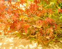 【ひらまつメンバー限定】秋の特別コース ワインペアリング付き