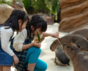 [Saturdays, Sundays, and holidays lunch] Kobe Animal Kingdom admission & Jukeien lunch set [Adult]