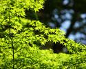 【期間限定】トップラウンジでの絶景ロケーション 新緑AfternoonTea
